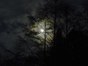 Forest by Moonlight - Author's Notes